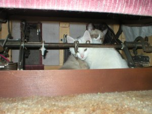 Under the chair...